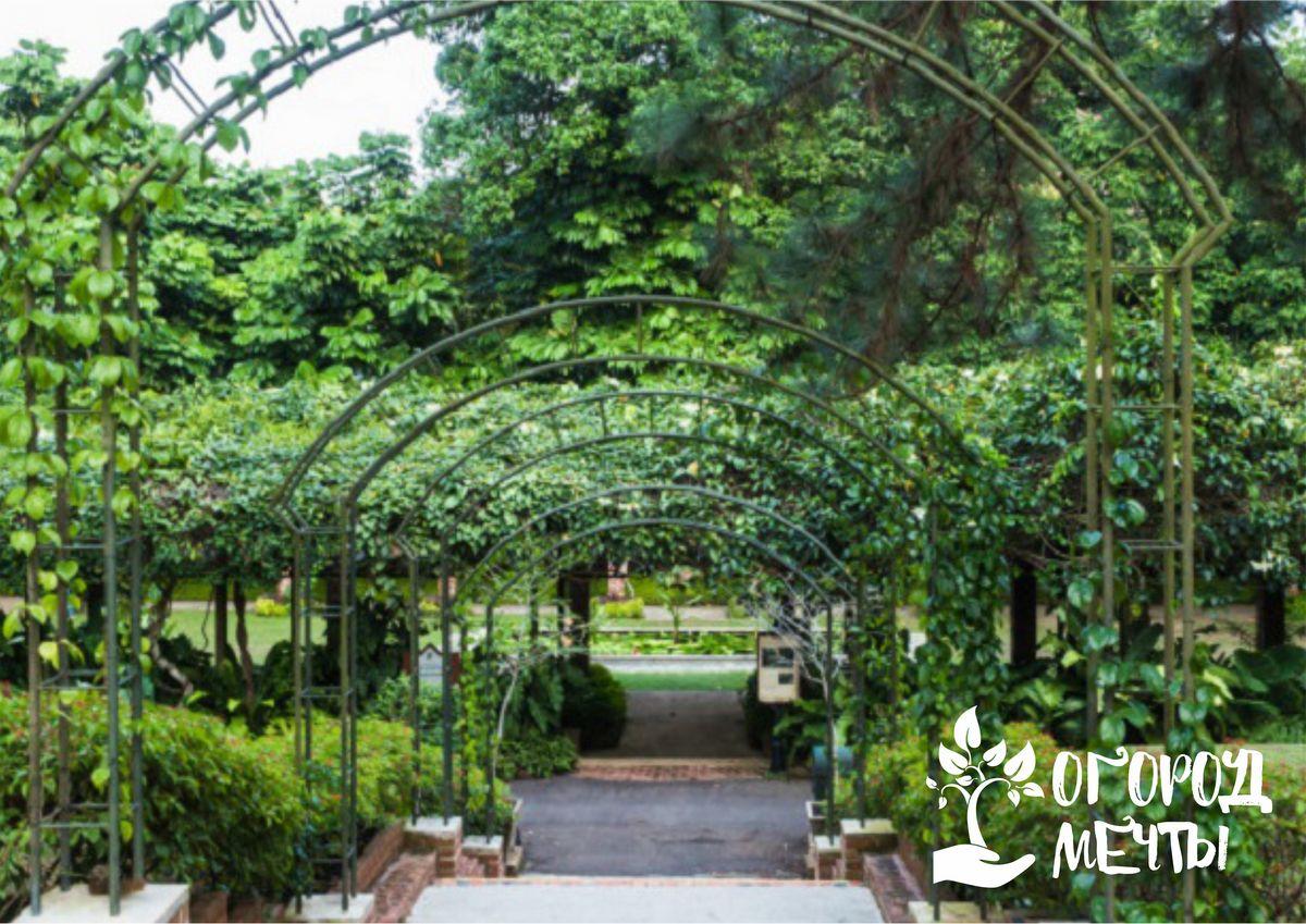 Выбор месторасположения и материалов для садовой арки