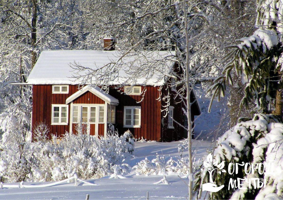 Как спасти растения во время морозов, если нет снега: