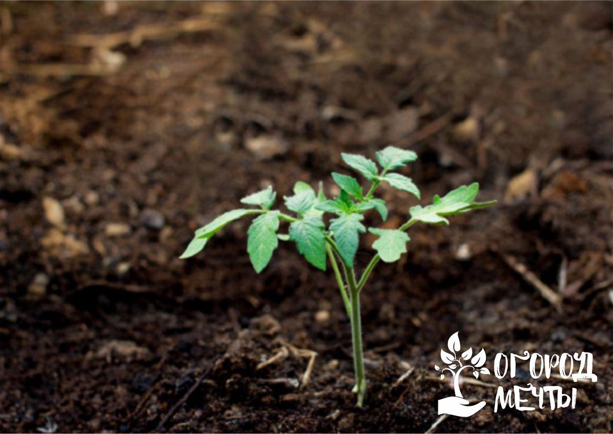 Семена необходимо распределить по влажной почве
