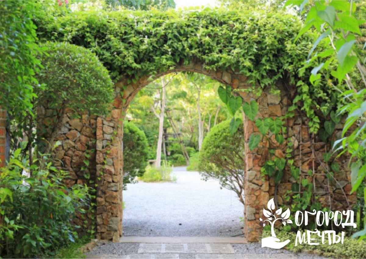 Виды арок для сада
