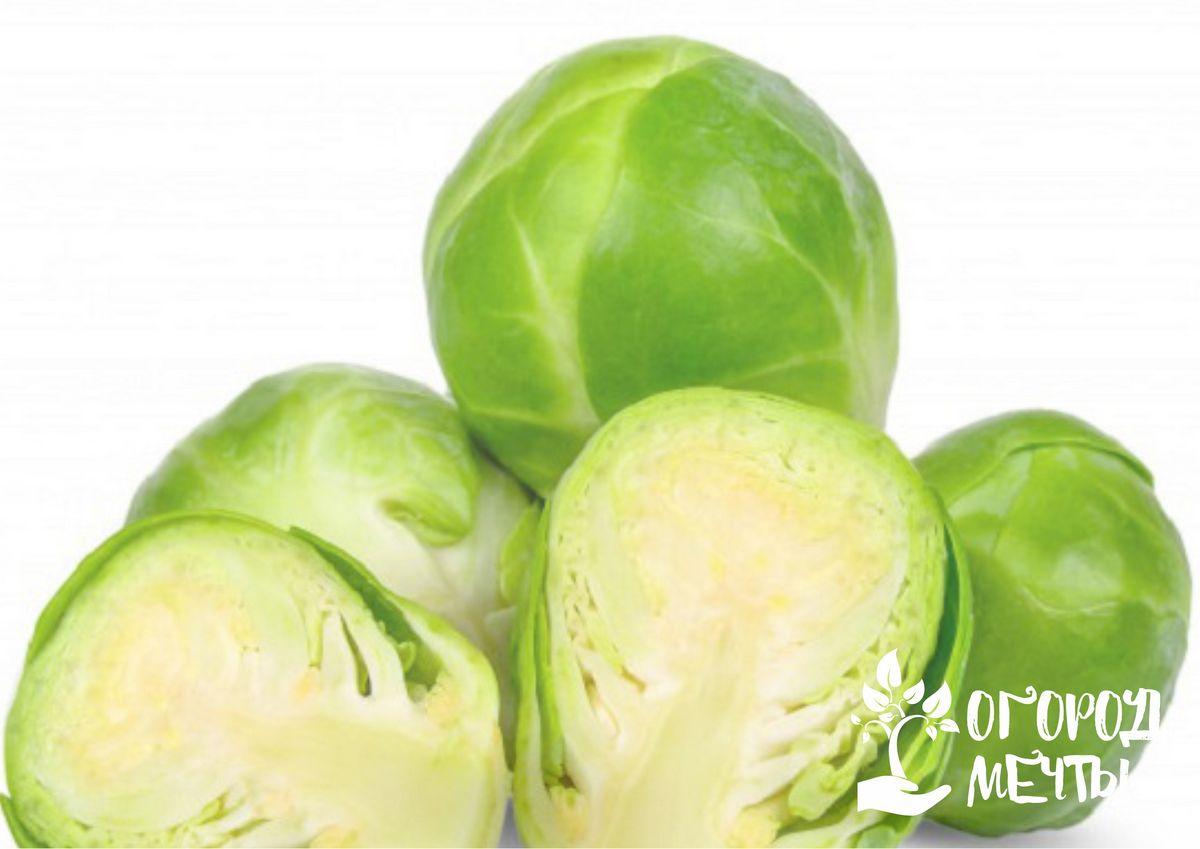 Уборка урожая брюссельской капусты и его хранение
