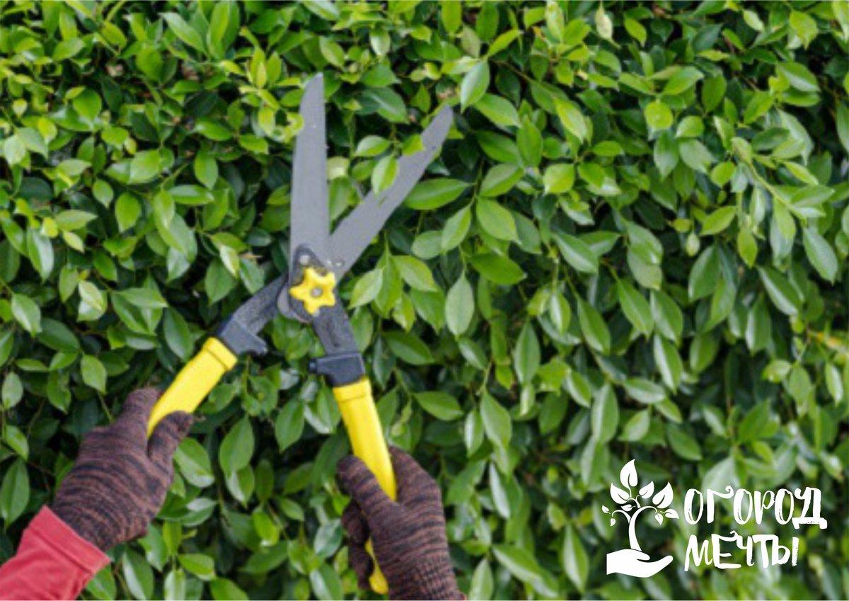 Уход за садовым секатором