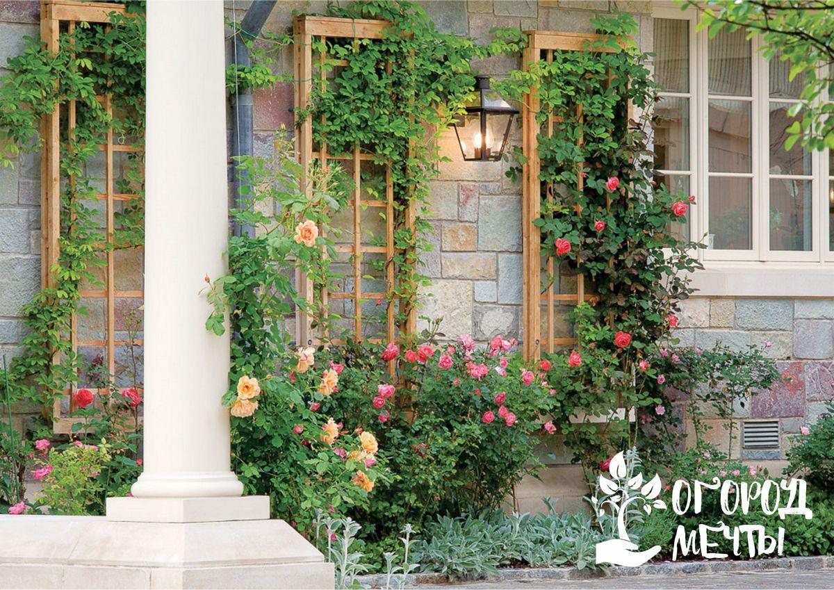 Садовые арки: виды конструкций и подборка лучших вьющихся растений