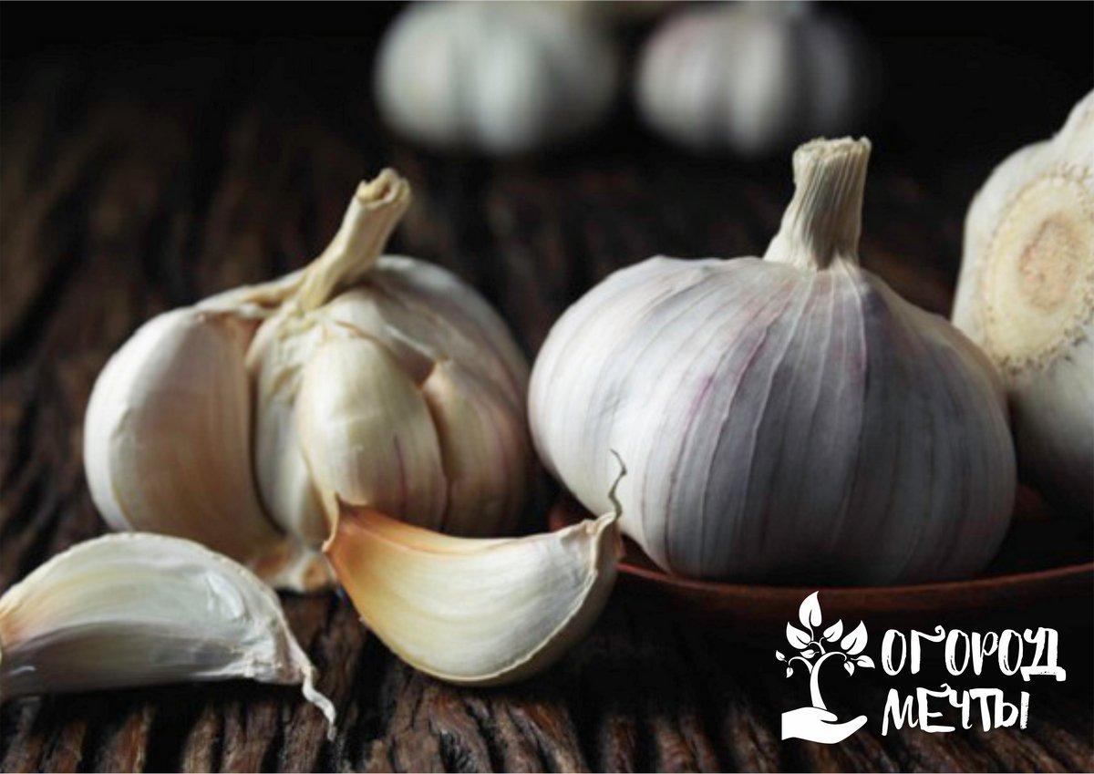 Как хранить чеснок и лук: нюансы и советы