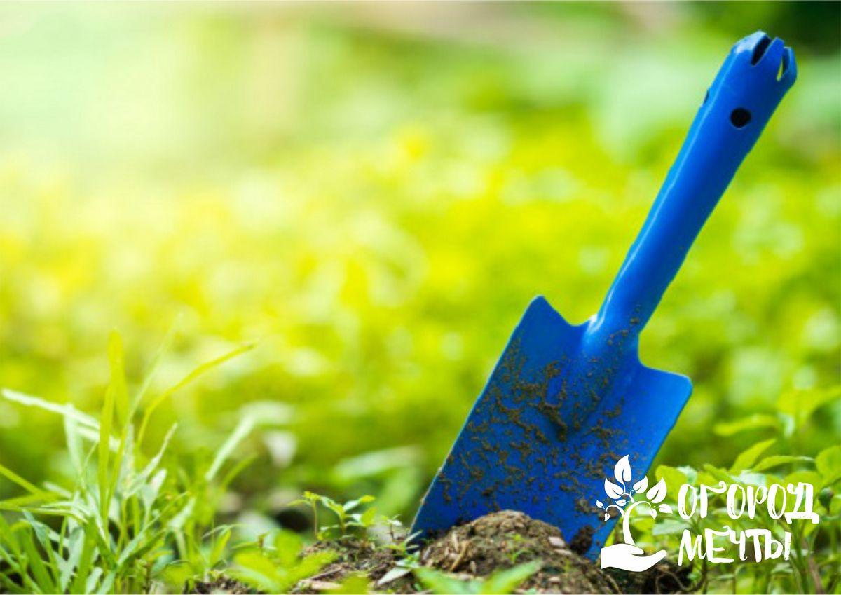Высадить луковичные растения