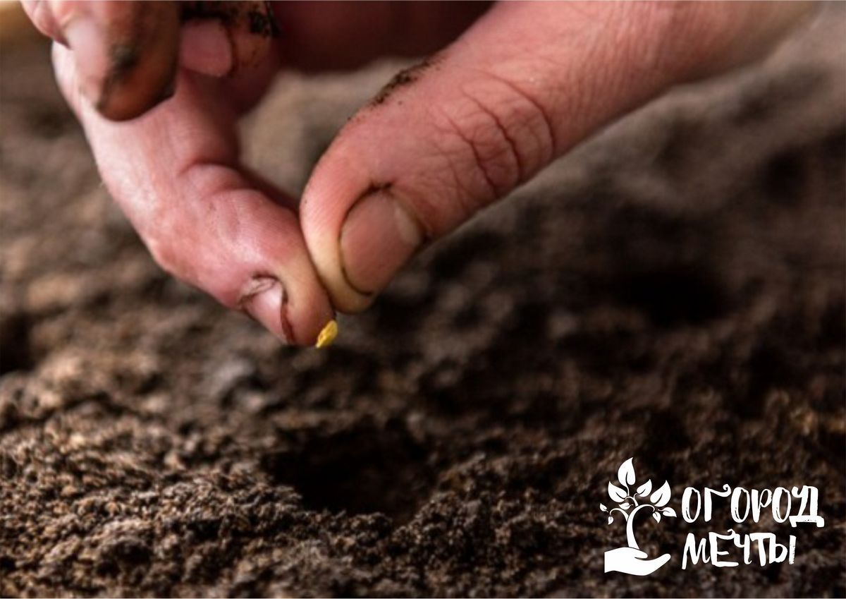 Посев дражированных миниатюрных семян