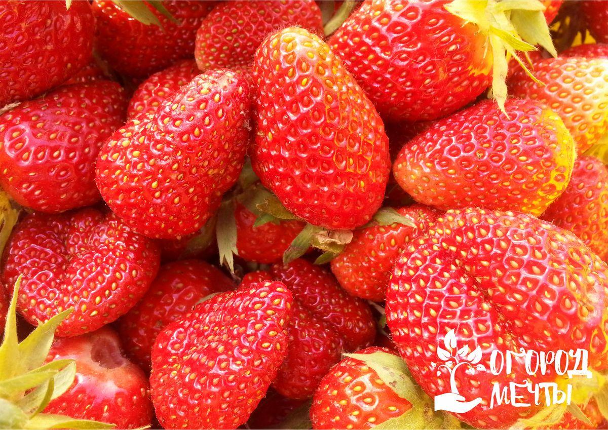 Органический сад: плодовые культуры, которые можно вырастить без капли химии