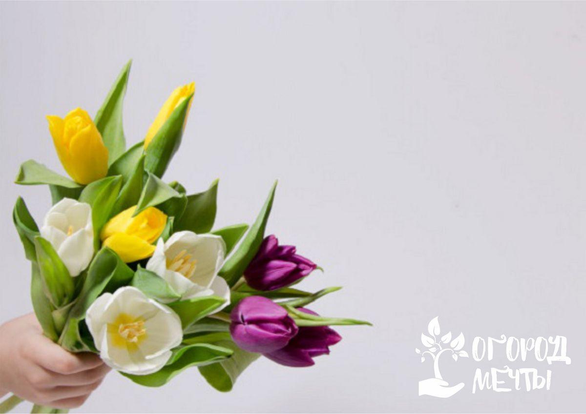 Пионовидные махровые тюльпаны: лучшие сорта
