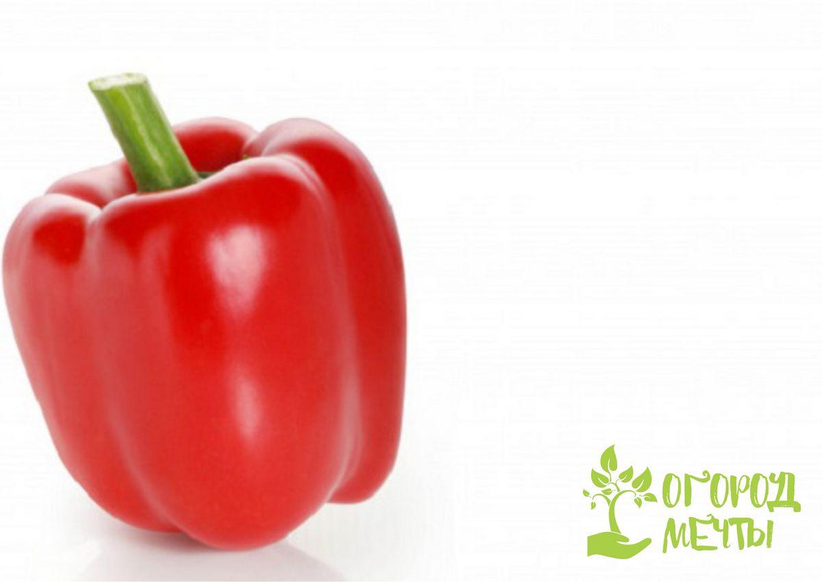 Сорта толстостенных перцев станут украшением вашего огорода