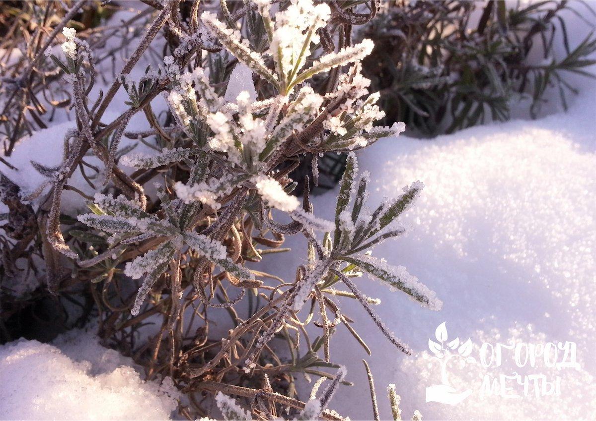 5 причин гибели растений в зимний период и их профилактика