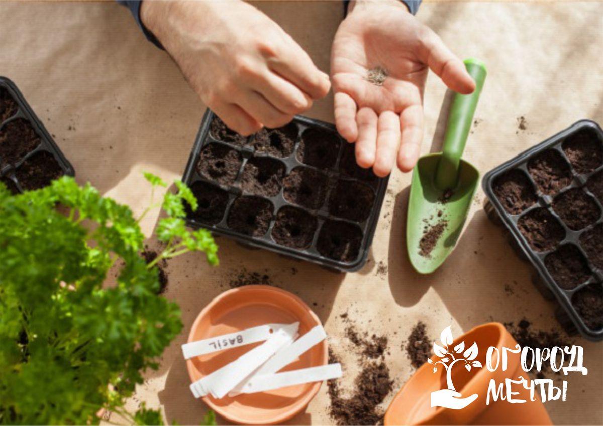 Посев мелкосемянных растений: особенности и нюансы
