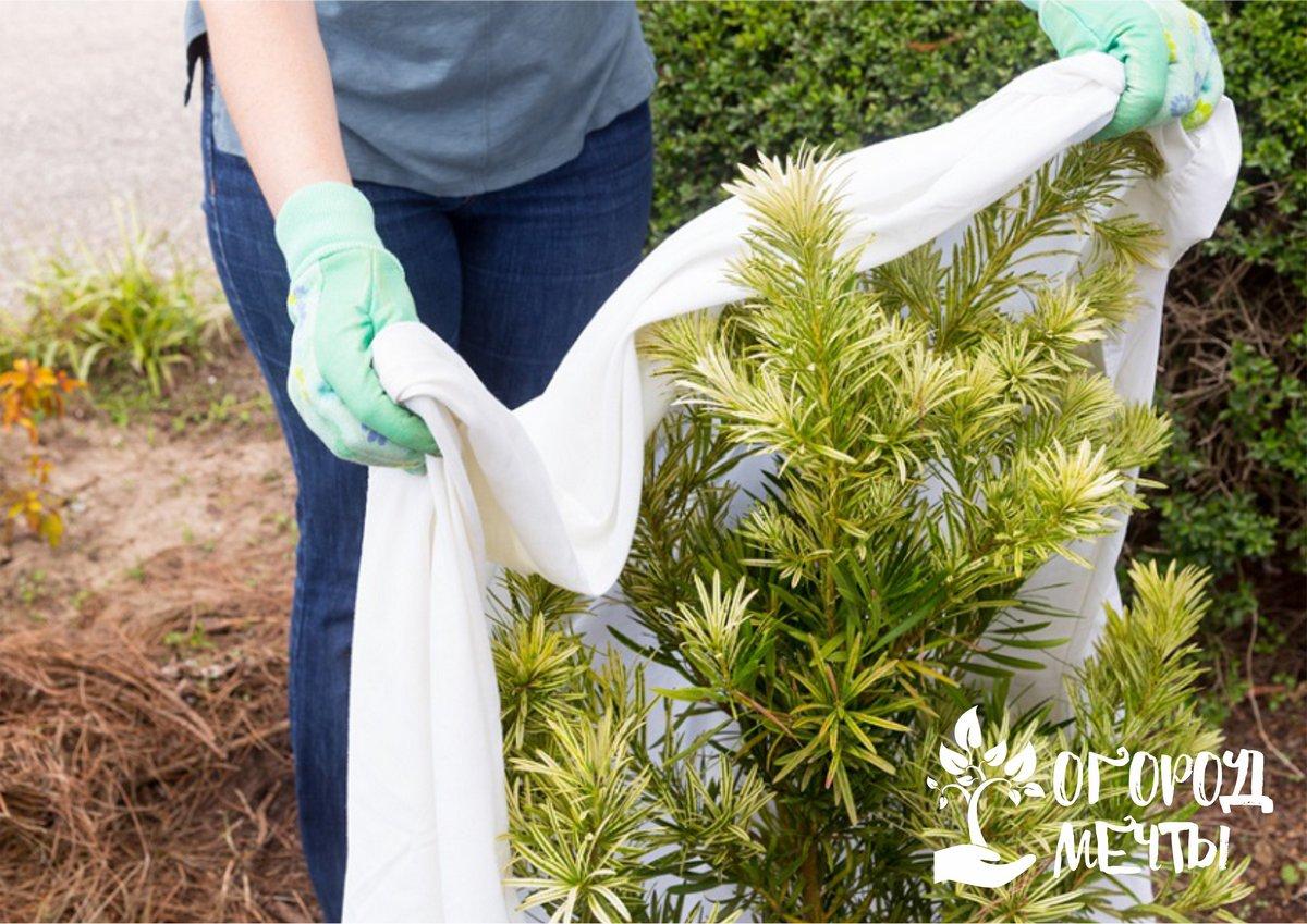 Защита для сада и цветника: девять лучших вариантов утеплителя для растений