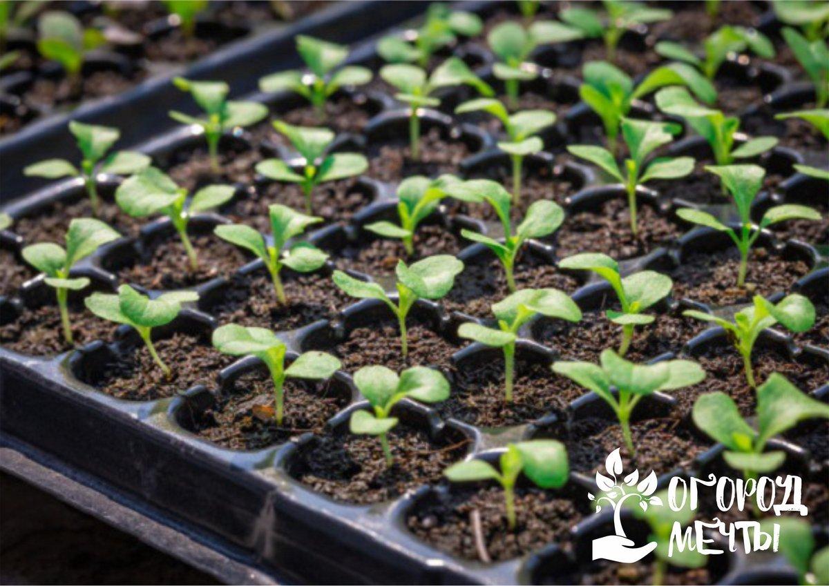 Помните и о том, что не все растения можно пикировать