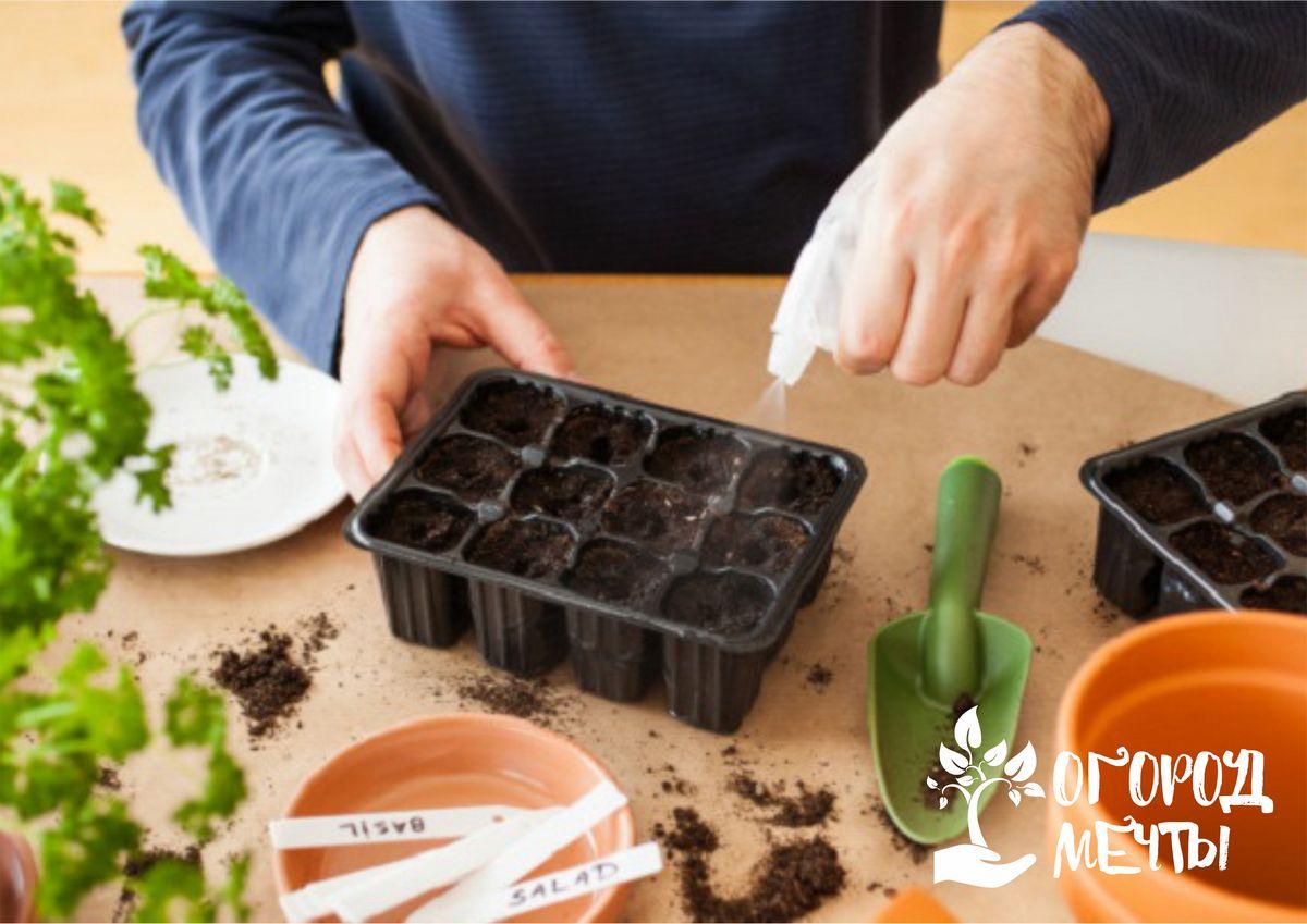 Как посеять мелкие семена огородных и цветочных культур