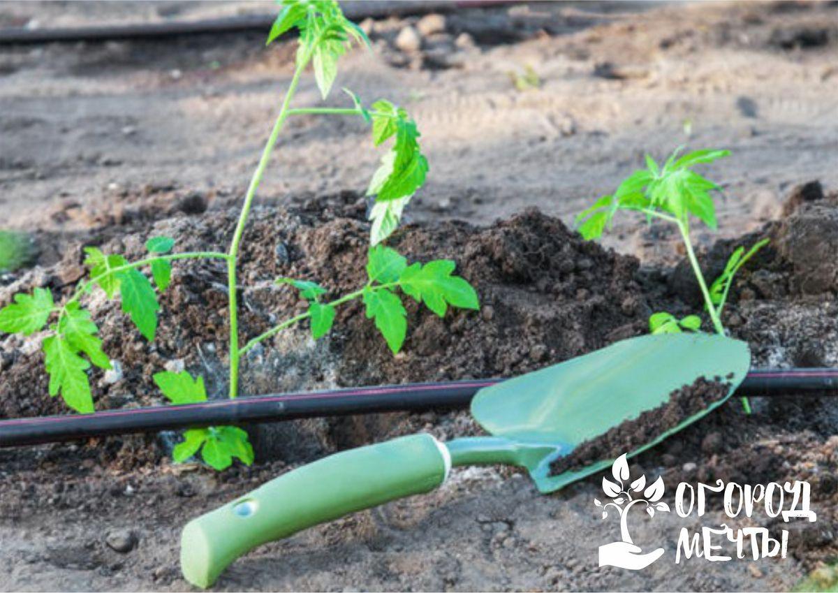 Следует провести посев зелени: укропа, артишоков, лука на перо, шпината и салата.