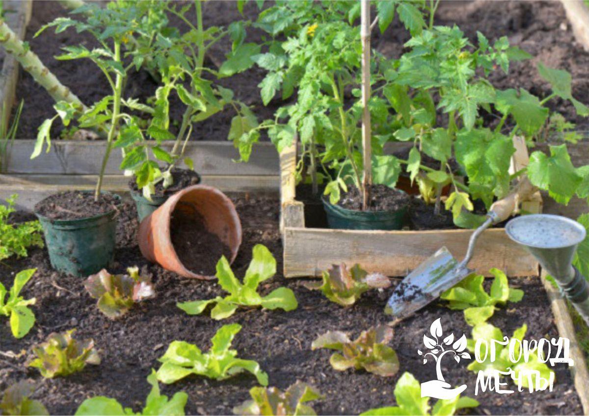 в начале весны можно сеять на рассаду