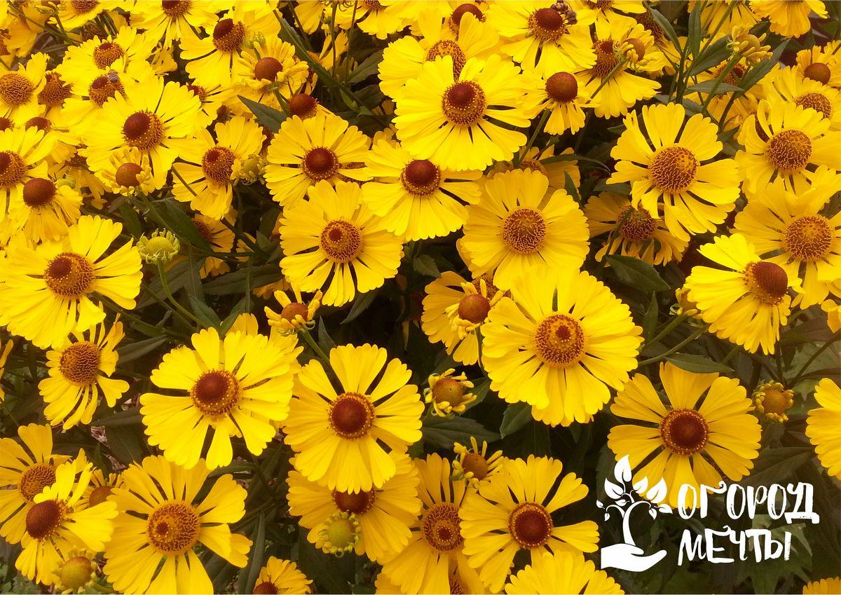 Как подобрать цветовую палитру растений для сада