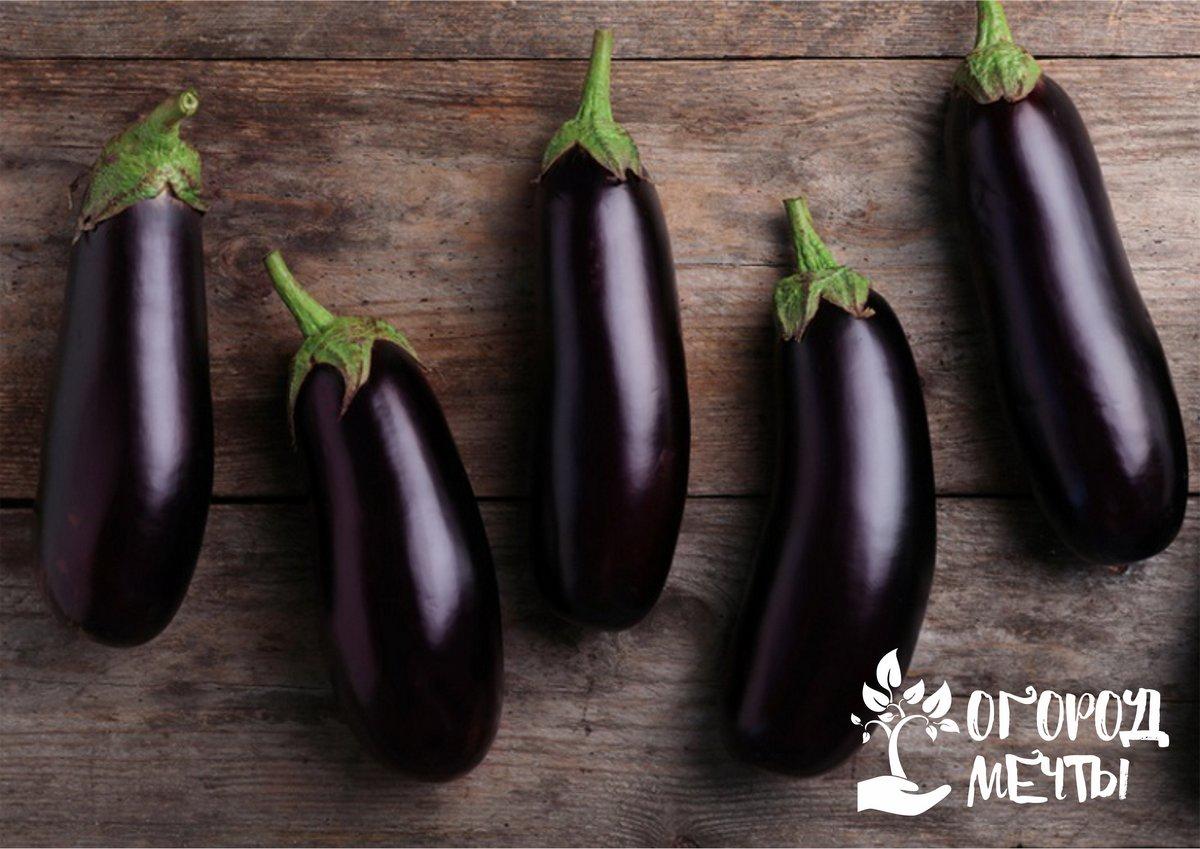 Выращиваем баклажаны в теплице: топ-10 сортов