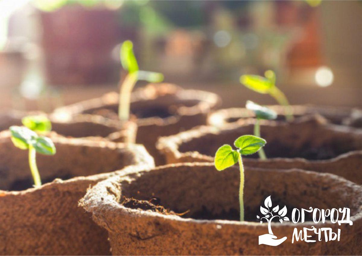 Об огородных растениях, которые следует сеять в конце февраля