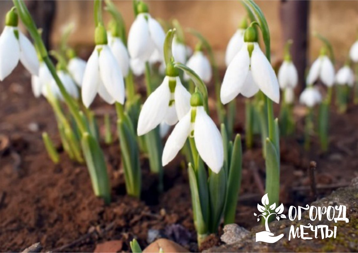 Календарь дачника на 1-10 марта: самые важные работы в цветнике, саду и огороде