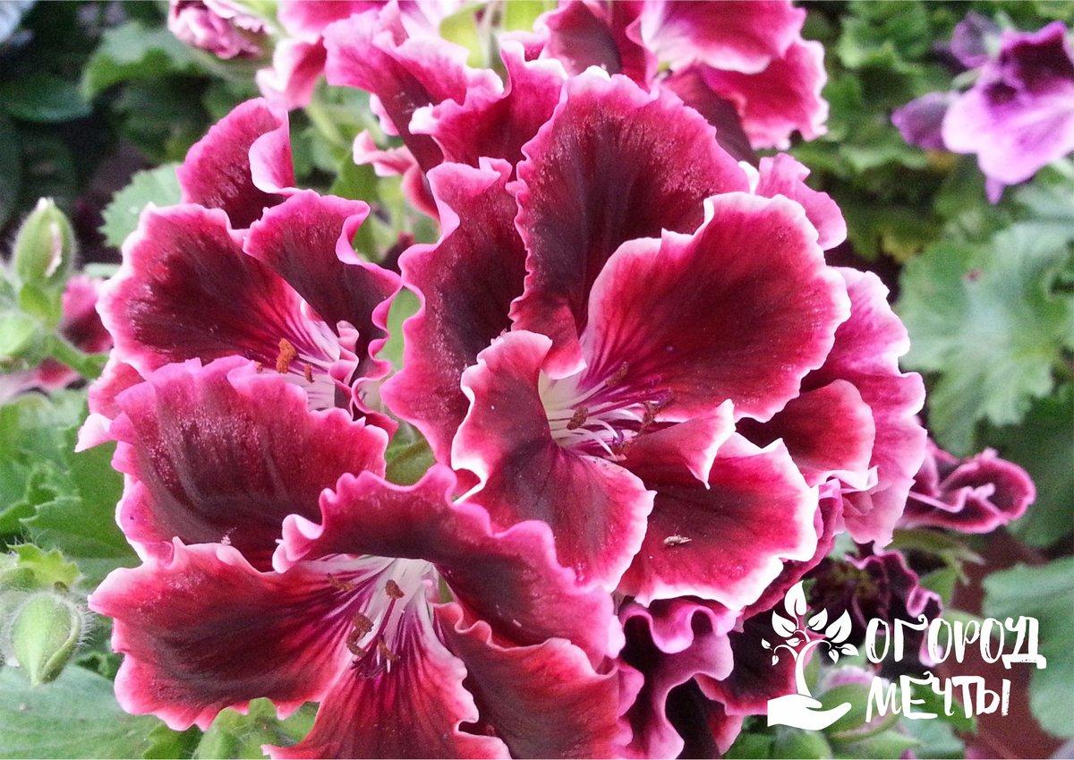 Средство для обильного цветения
