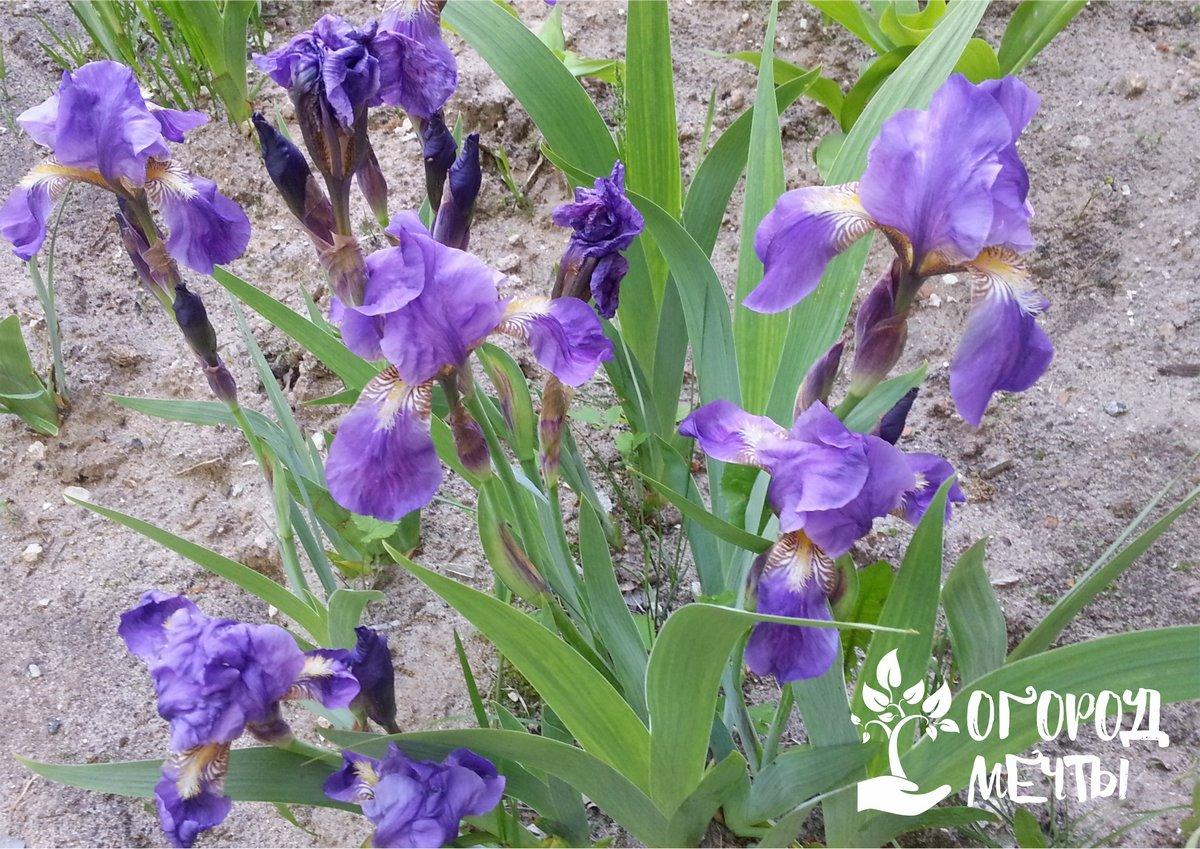 Топ-12 растений для влажных и сырых почв