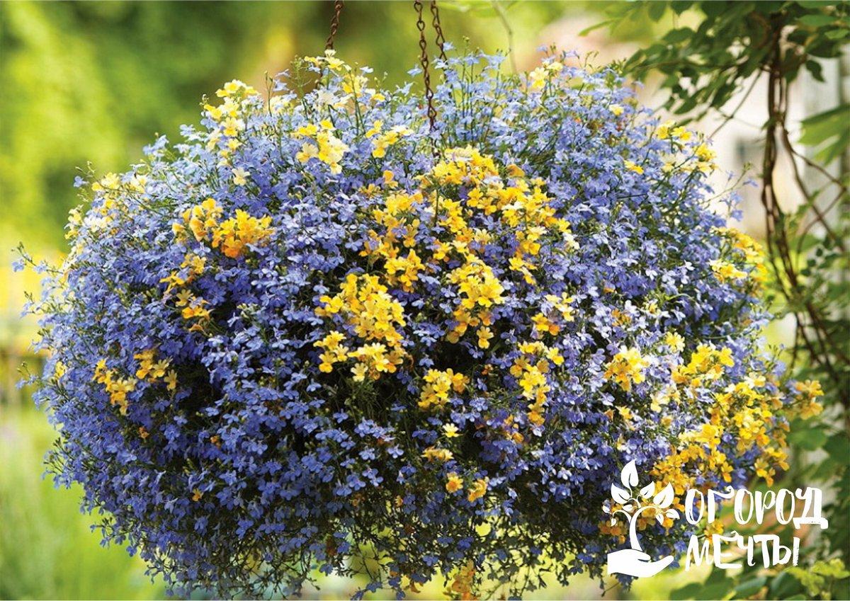 Лучшие неприхотливые растения с шикарным летним цветением