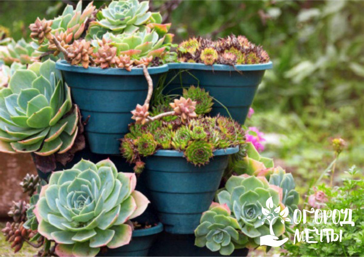 Мини-сад на дачном участке: нюансы создания и ухода