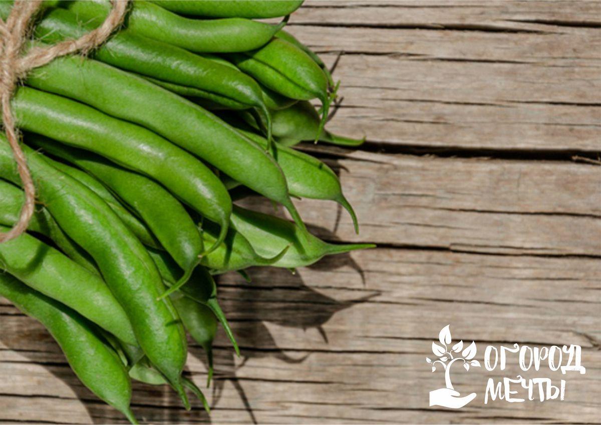 Спаржевая фасоль: особенности агротехники и ухода