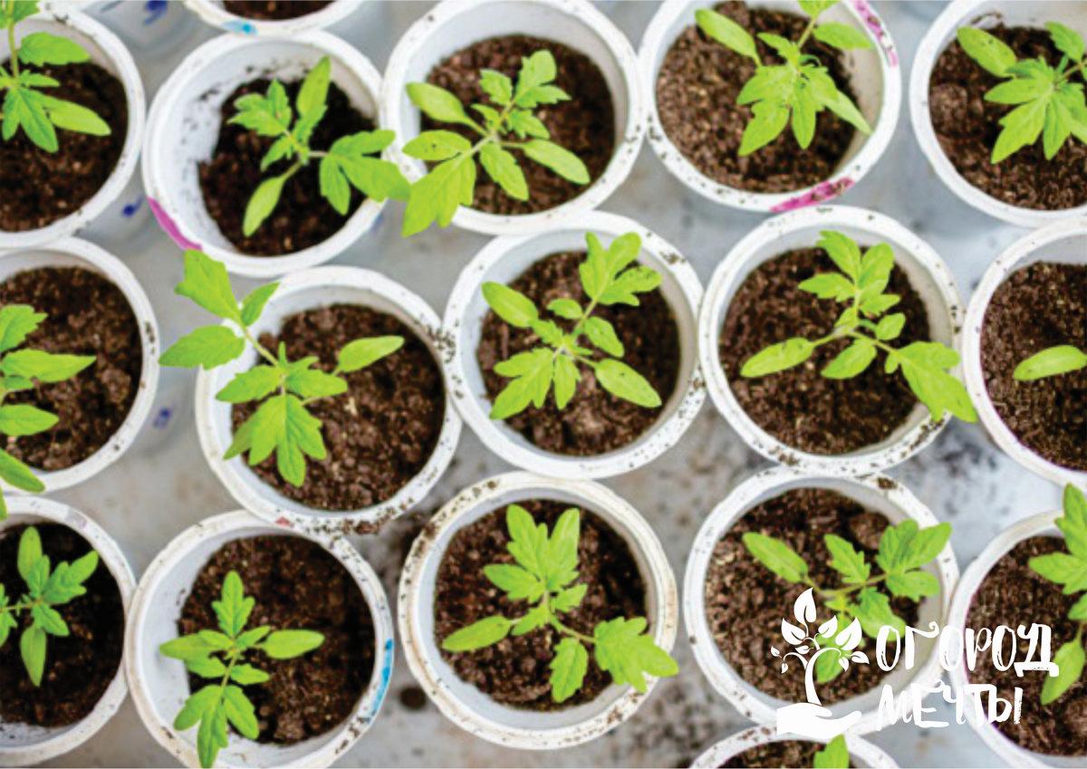 Отличный период для посева сортового пастернака, редиса, редьки и репы