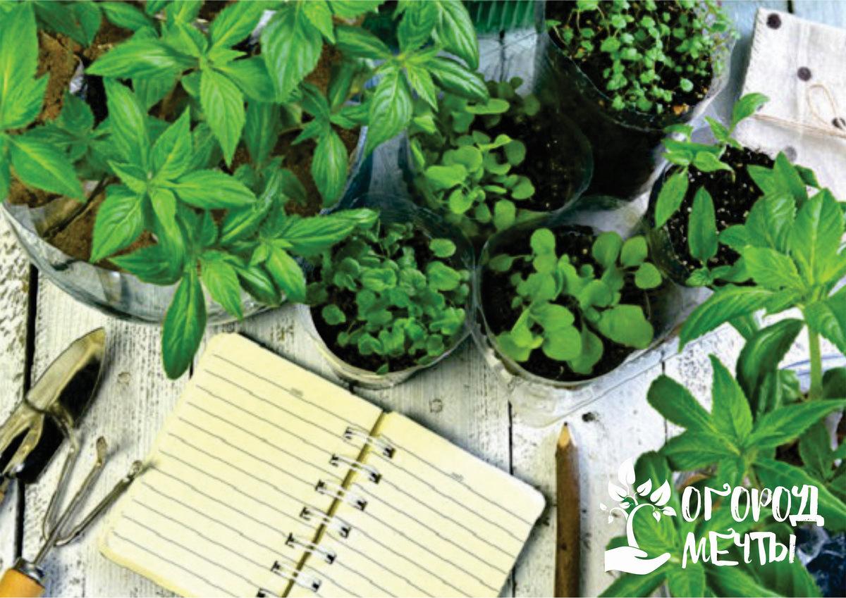 Хороший период для проращивания картофеля, пикировки мартовской рассады и посадки сеянцев капусты
