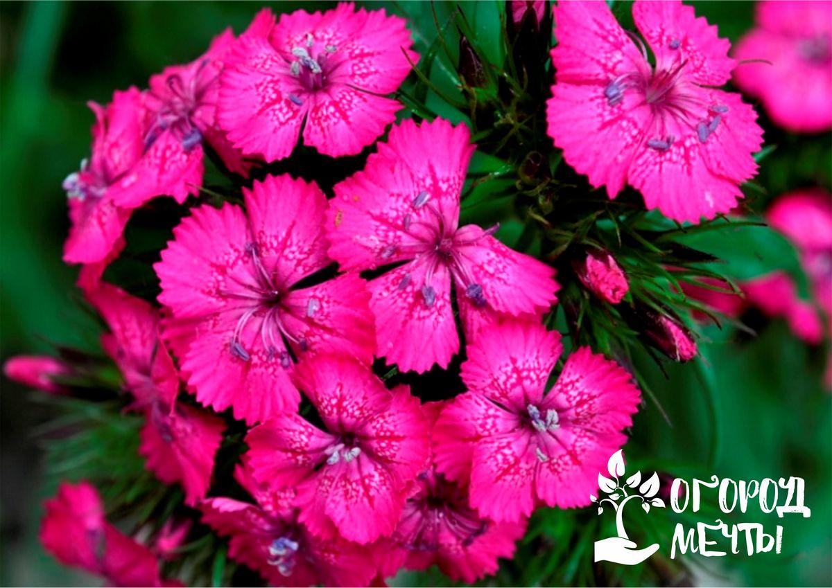 яркие или светлые цветки