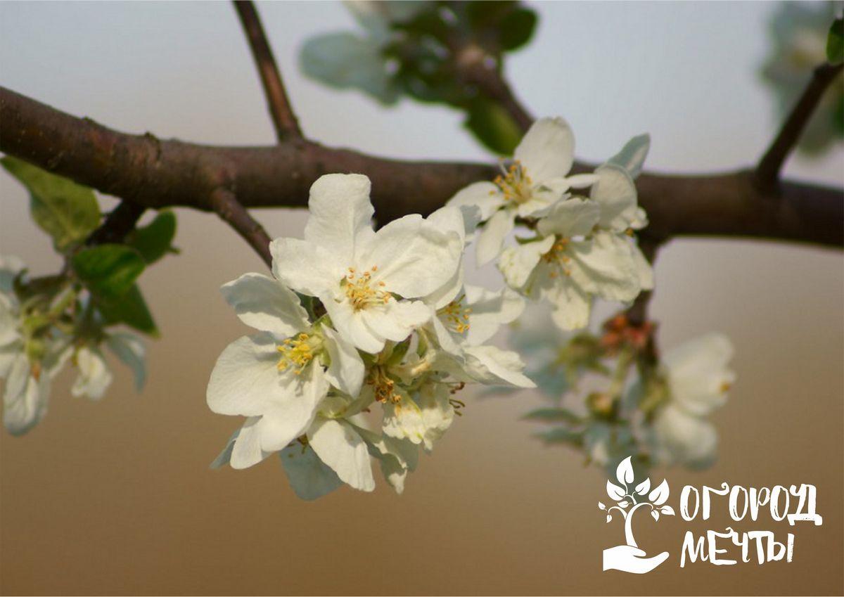 Лунный календарь на 1-30 апреля