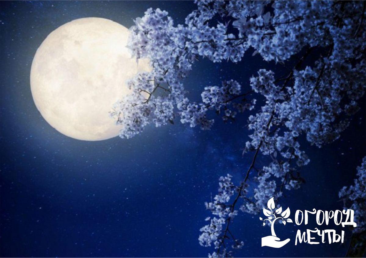 Лунный апрельский календарь для дачника: планируем посевы, посадку и пересадку растений