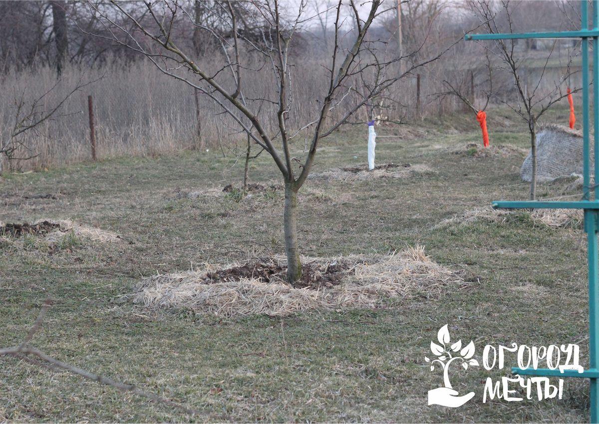 Цветущий апрель: список важных работ в саду