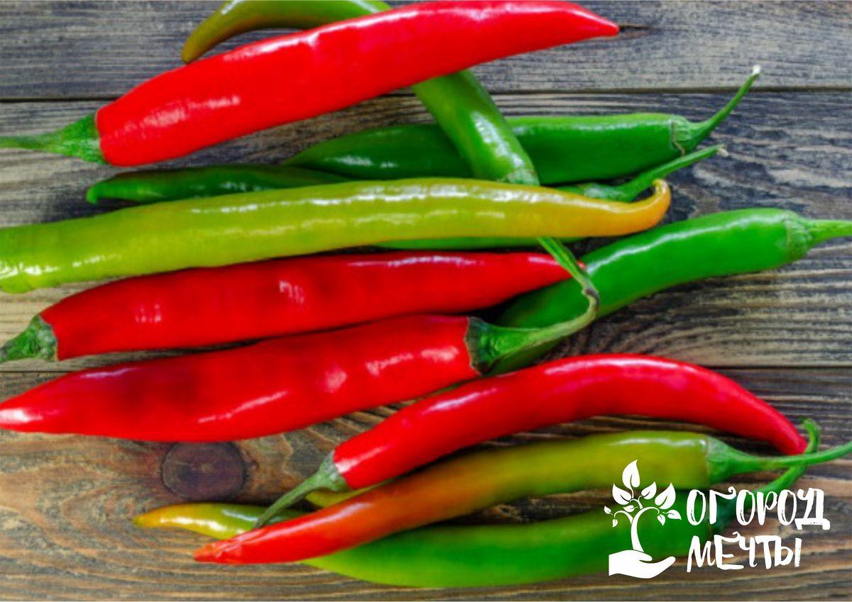 Добавим огоньку: как вырастить острый перец на дачном огороде