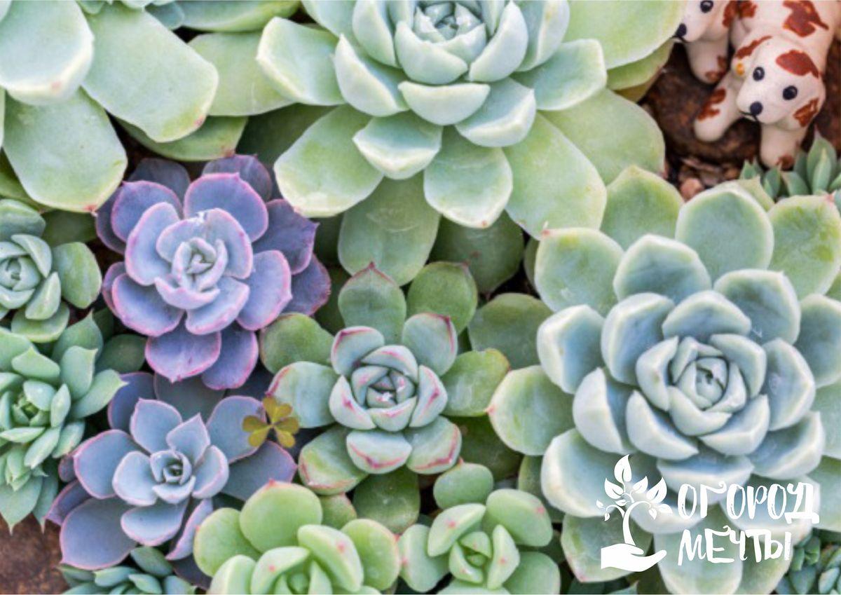 Подборка растений и декора