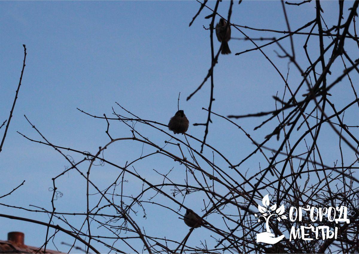Это может быть специальное удобрение, птичий помет