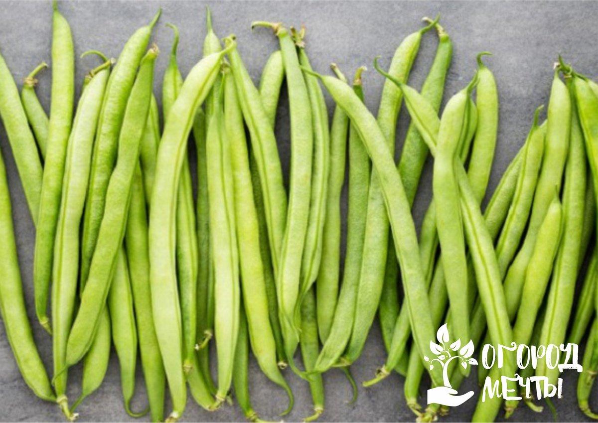 Собирать урожай следует в тот период, когда фасоль достигнет нужного вам развития