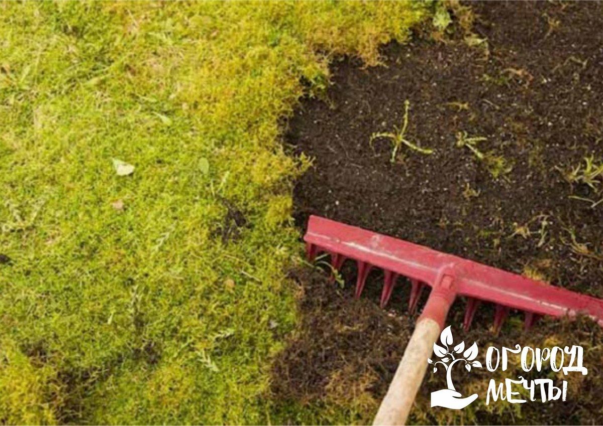 Почему появляется мох на газоне