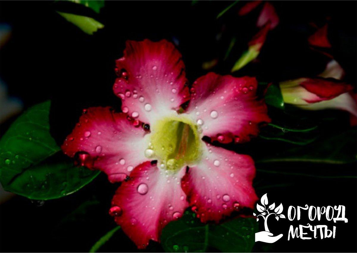 Хотите, чтобы сад выглядел великолепно в любое время суток? Посадите в нем растения с ночным цветением!