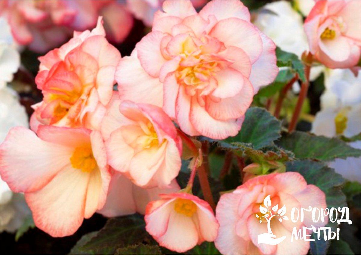 Что посеять дачнику в цветнике в мае: самые важные посевы месяца