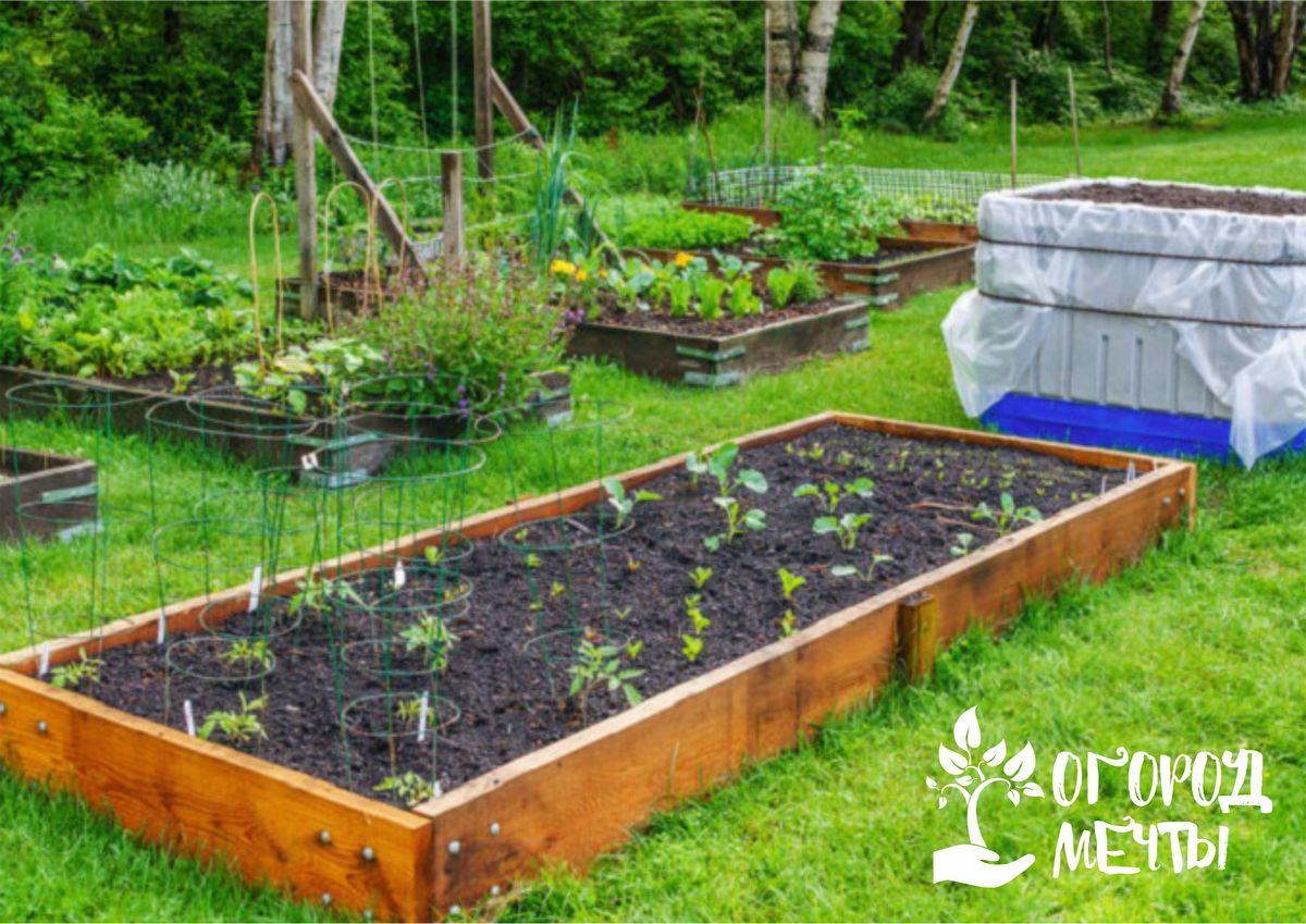 Ранний урожай обеспечен, если вы посадите сеянцы в теплые грядки! Раскрываем все секреты и достоинства теплых гряд на даче