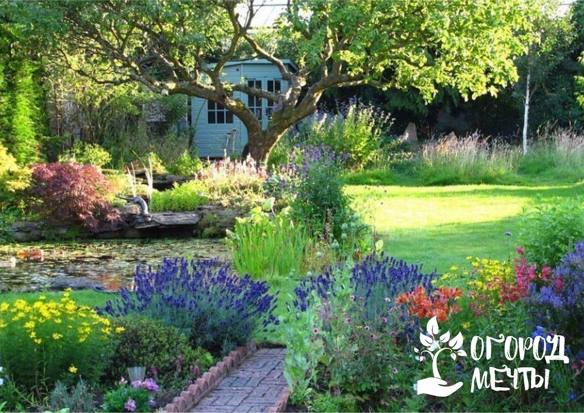 Выбор растений для садов в кантри стиле