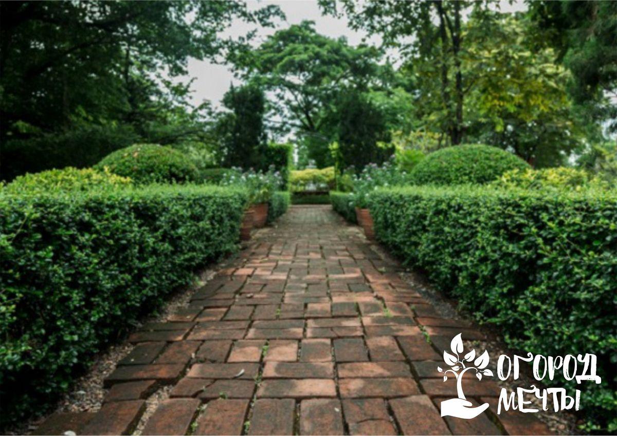сад должен стать настоящим украшением дачного участка