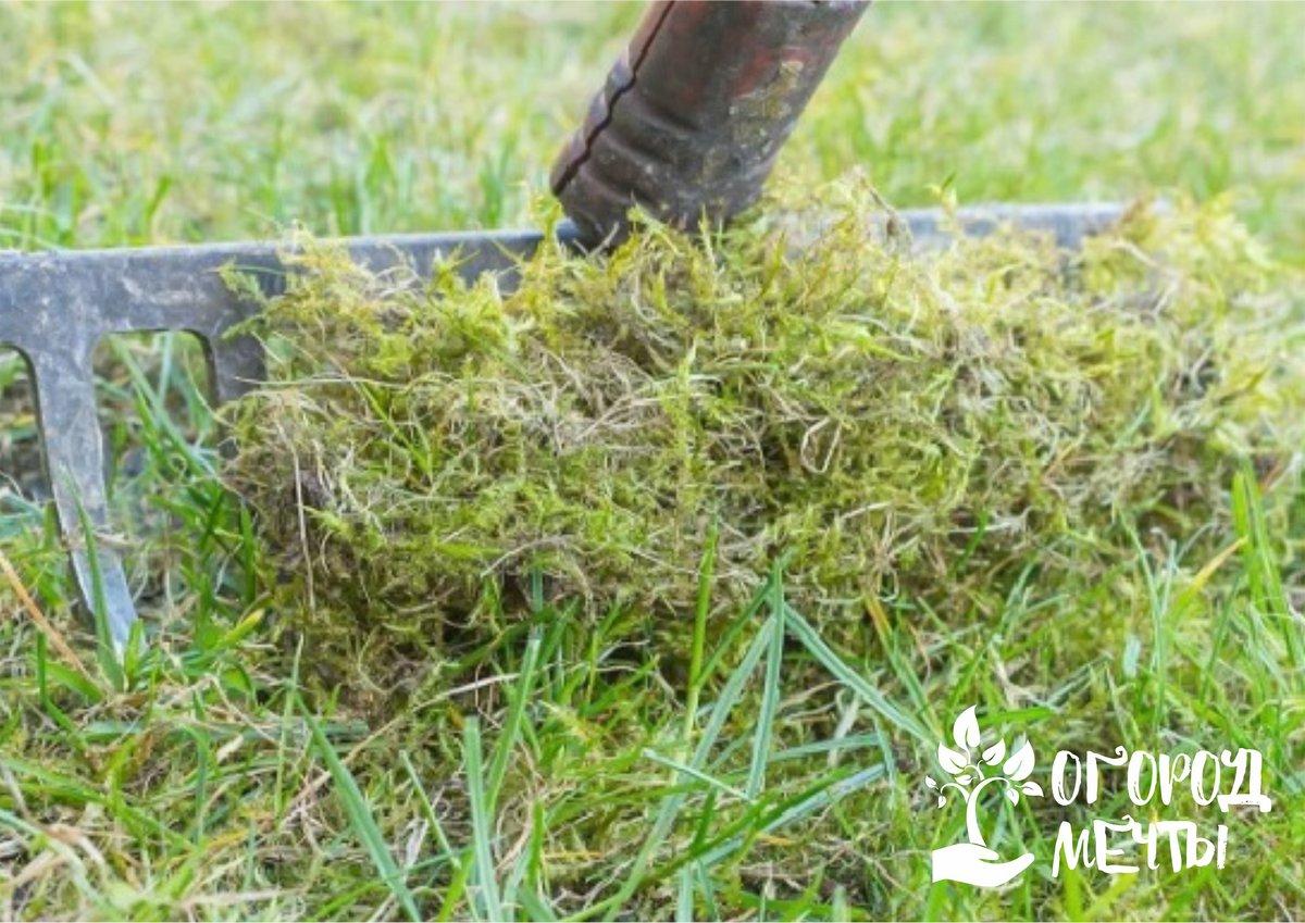 Причиной появления мха на газоне может стать и регулярная стрижка газона