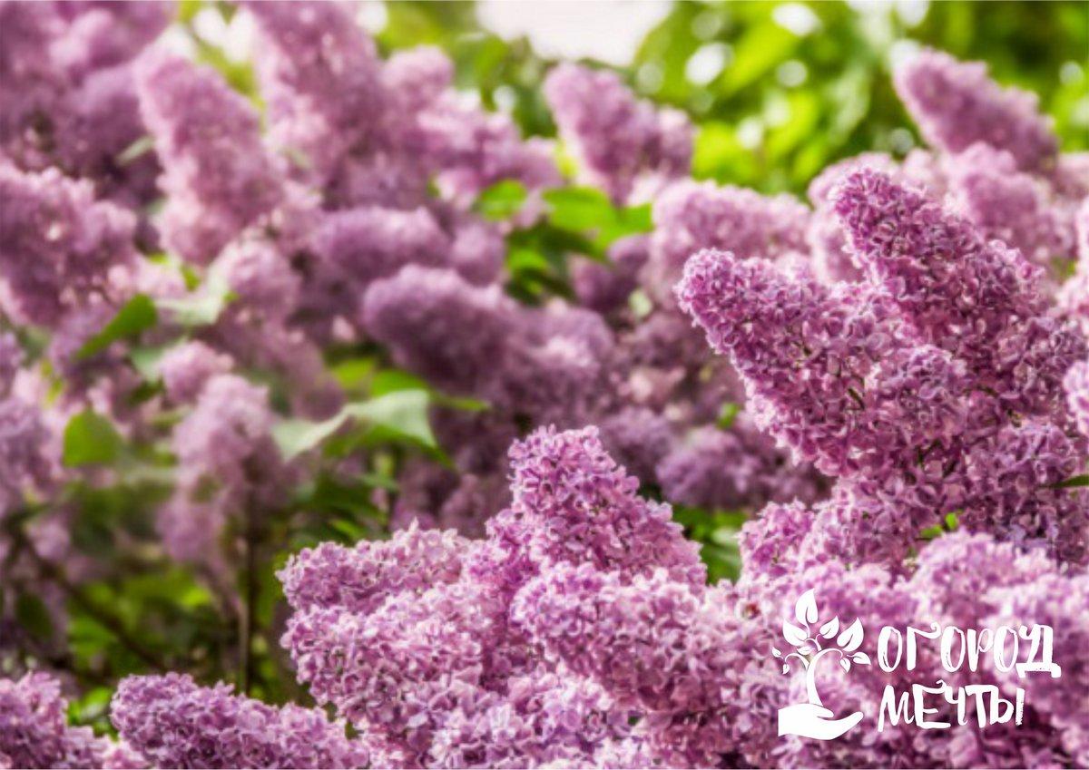 Топ-6 ароматных утренних и дневных цветов