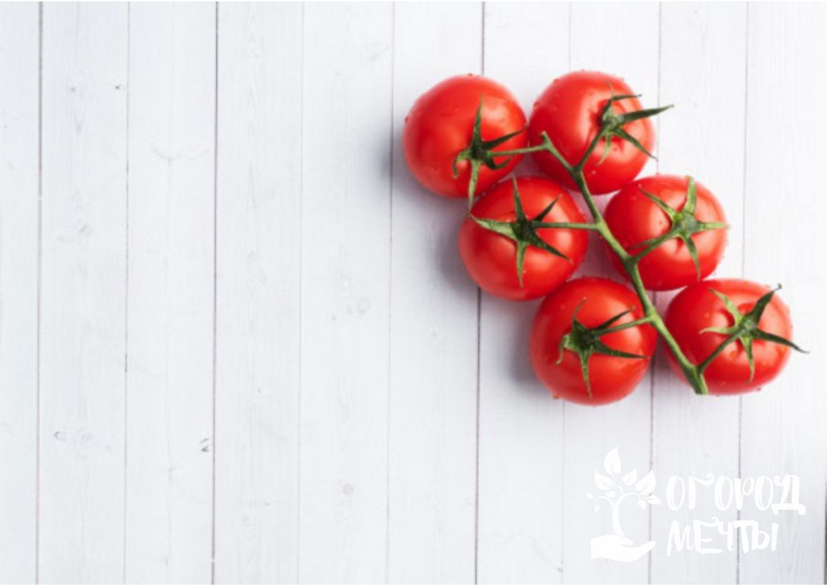 """""""Дубрава"""" - довольно неприхотливый сорт раннеспелого томата"""