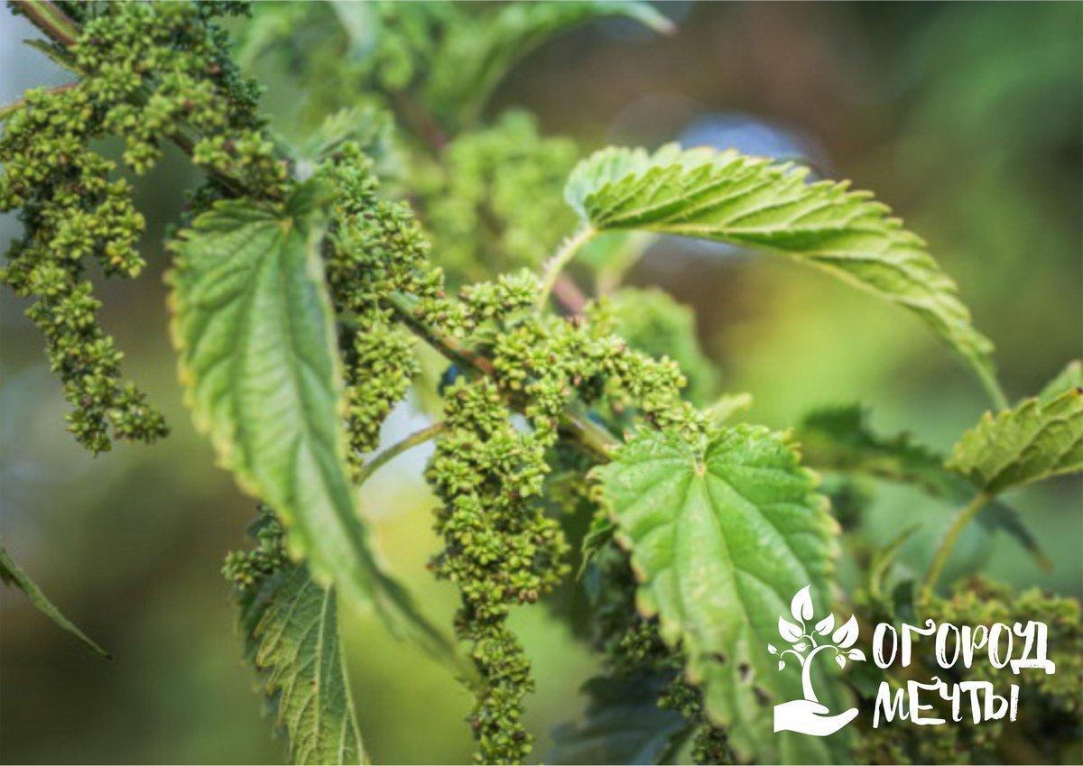 Больше никакой химии для стимуляции роста растений! Топ-5 лучших природных биостимуляторов для огородных, плодовых и цветочных культур