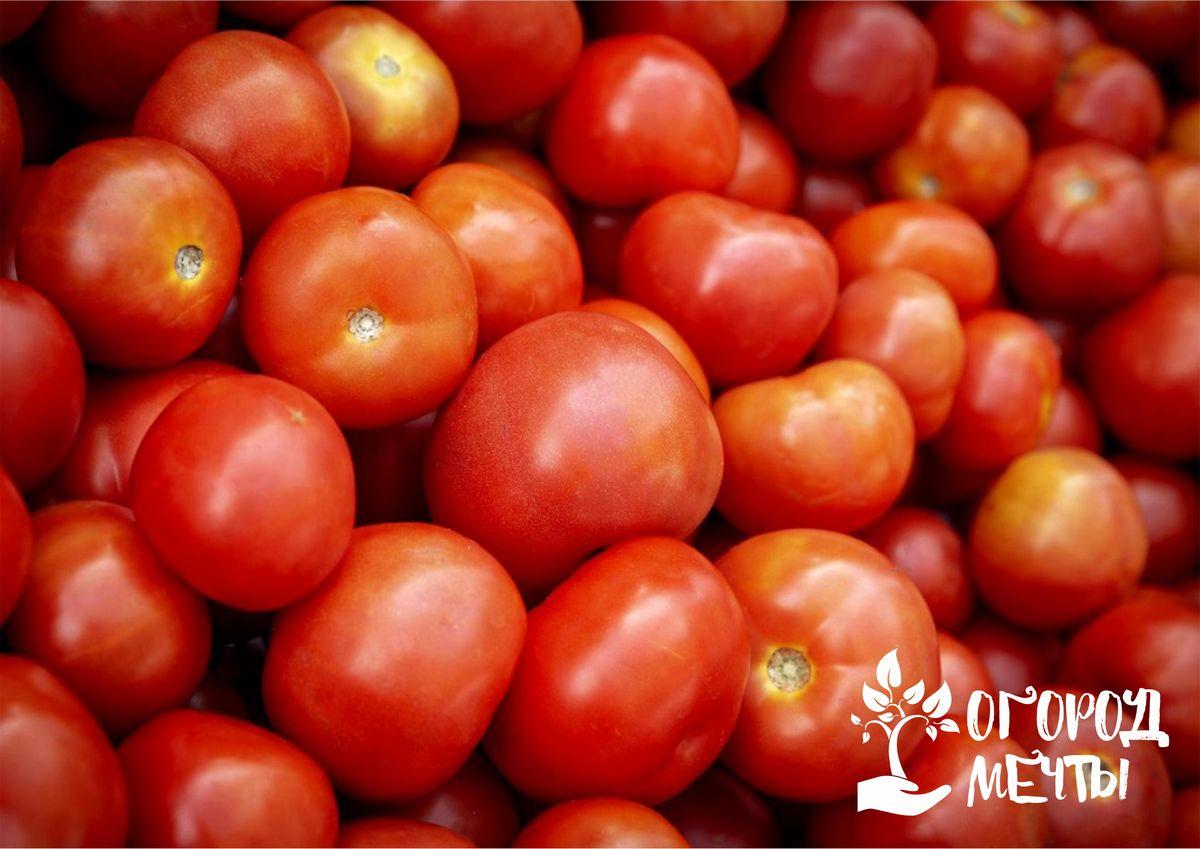 Пасынковать больше не нужно! Выращиваем помидоры без всякой формовки